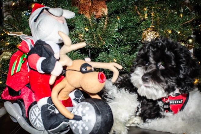 Santa_Cycle_and_Mojo