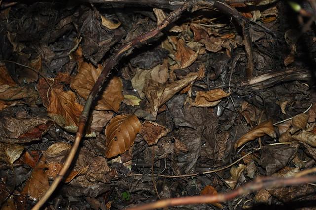 2012-11-20 Hydrangea 02