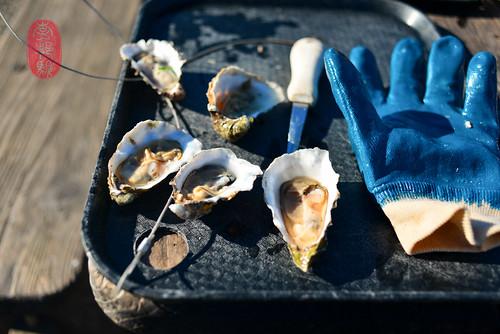Hog Island Oysters