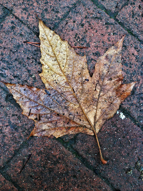 Leaf III