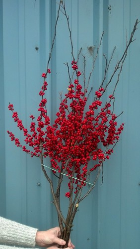 Fresh Cut Red Ilex Berries | Oregon Coastal Flowers
