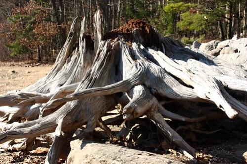 20121110_Deep_Creek_State_Park_008