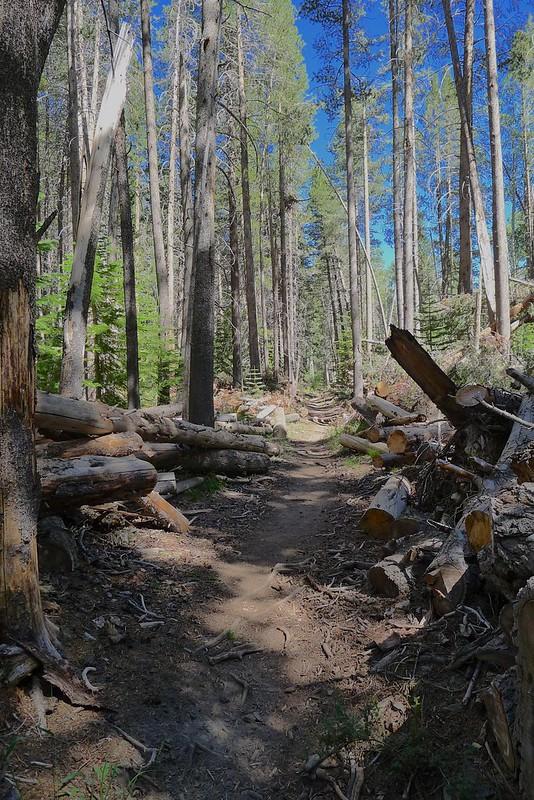 Cleared Downed Trees