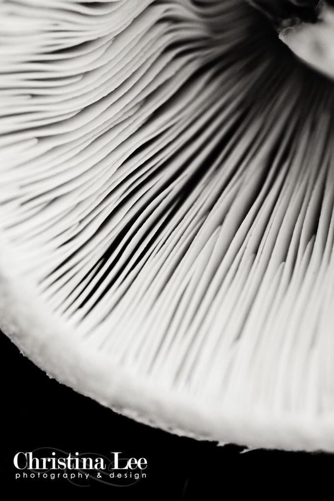mushroombwweb