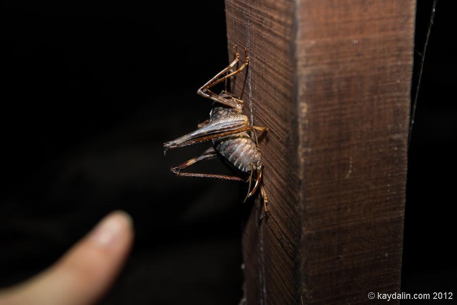 насекомое в пещере