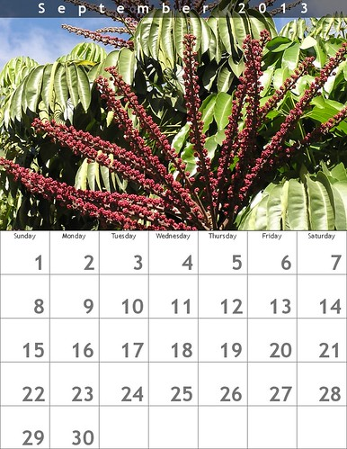 September Calendar (Oaxaca Trees)