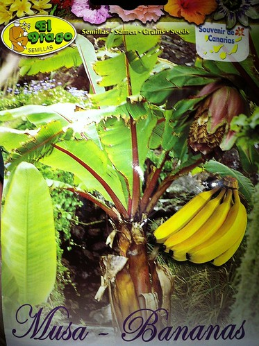 Banaanipuu by niini