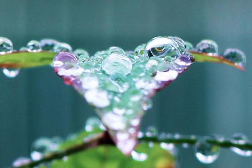 December-Rain-Drops-2