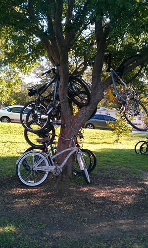 10-12-12 TX - ACL2 Bikes in trees