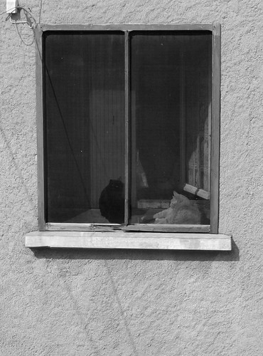 cats in window black and white