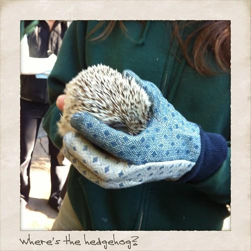 Where's the hedgehog?