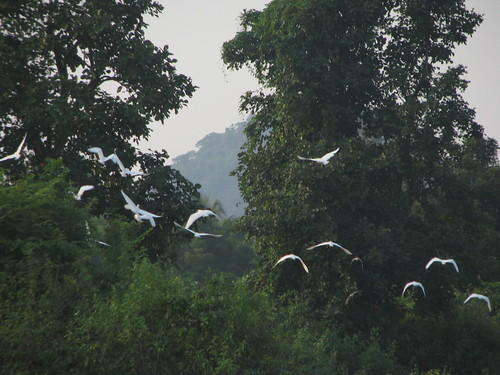 Flying Cranes by mdashf