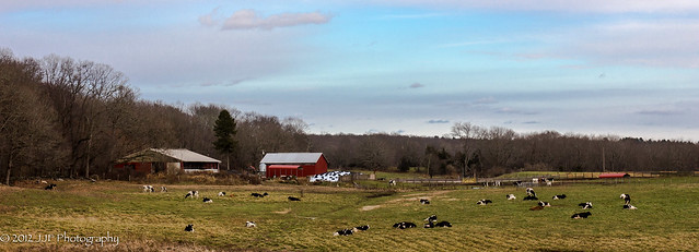 2012_Nov_25_Dairy Farm_006