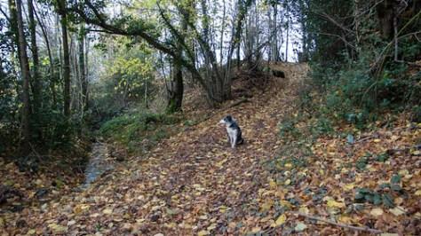 Dog waiting near the brook