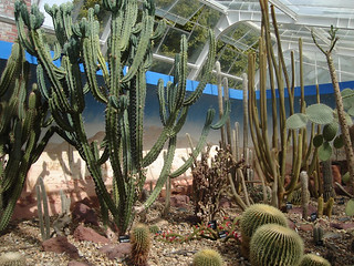 Cactii and venomous plants