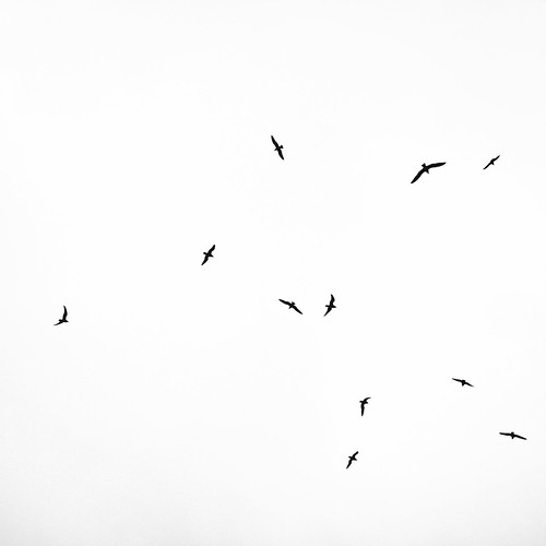 11 Birds Flying by Eleven ~ NYC~