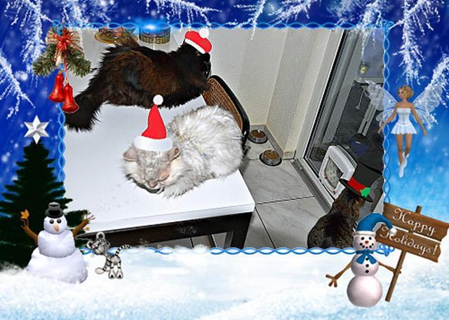 festive cats