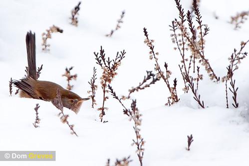 Dartford Snow Dipper