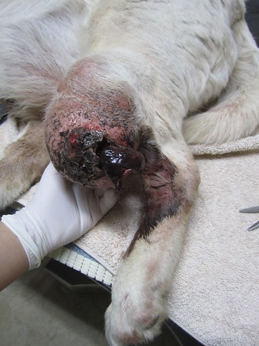 ringworm in dogs eye
