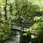 Nueva Zelanda, Isla Norte 46
