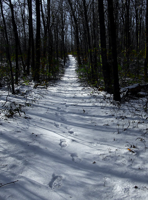 snowy trail