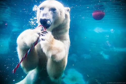 candy cane bear 1