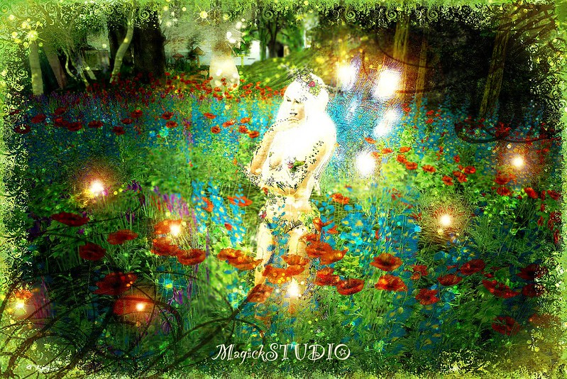 Inside the Fairy Circle