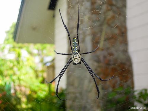 Eensie Weensie Spider by {israelv}
