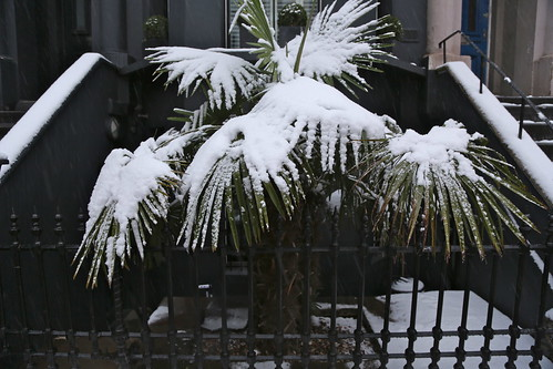 Palm Snow