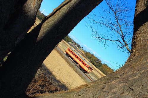 木のフレーム