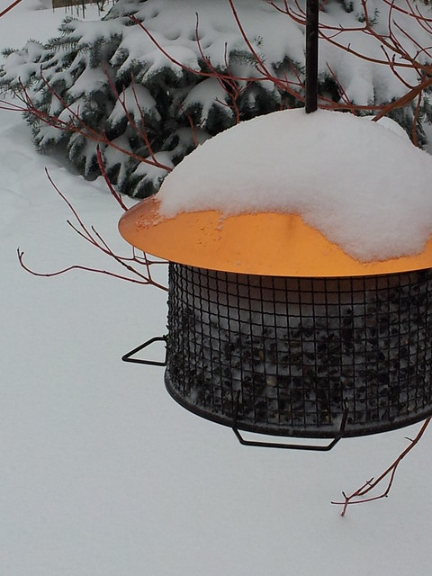 Bird Feeder Topped with Snow