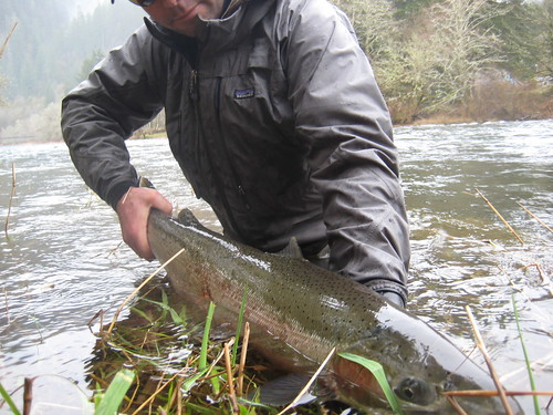 Wild Winter Steelhead Buck