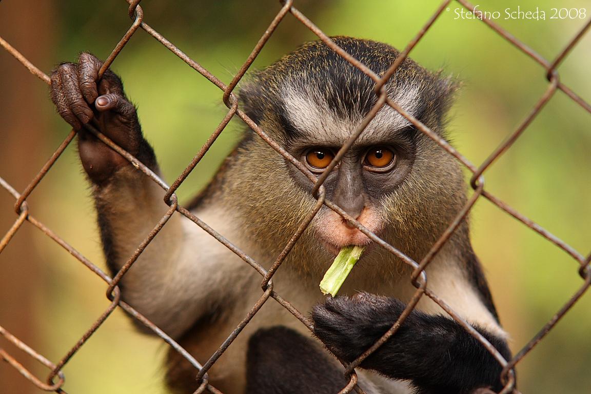 Limbe Wildlife Centre - Limbe, Cameroon