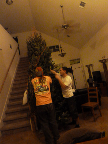 12-9-12 TX - Austin Christmas Tree 6