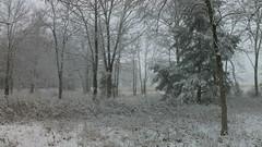 snow on christmas day