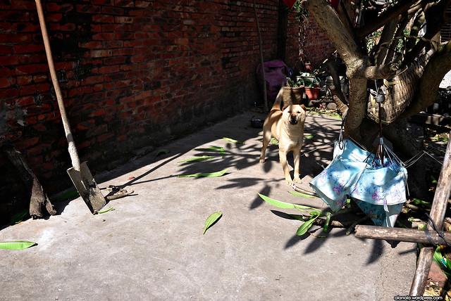 Dog in Liang Qi