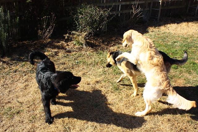 Trio at play