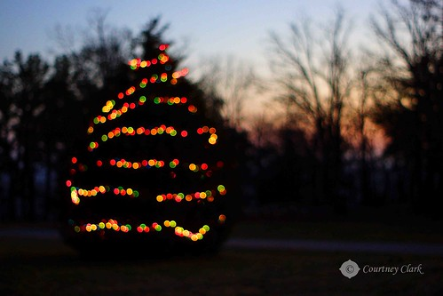 "17. ""Outside Christmas Lights"" Dusky Spruce by courtneyec90"