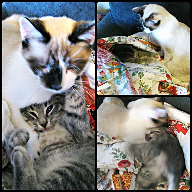 Mom's Quilt Kitten Wrestling Collage