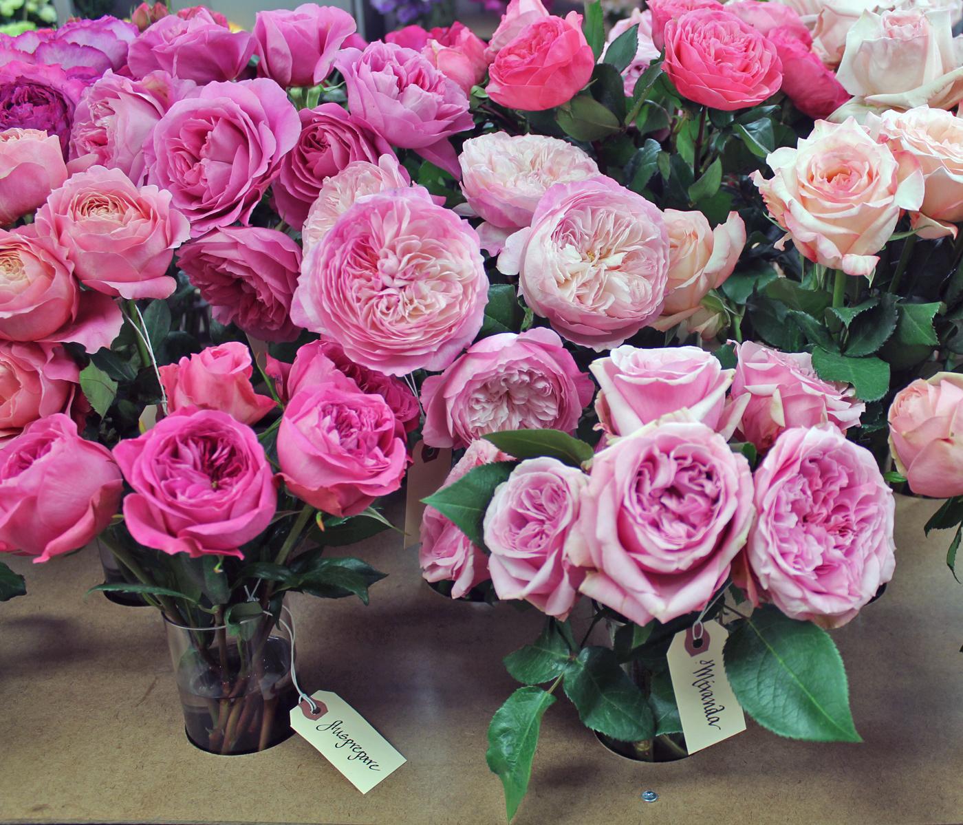 harvest-rose-3