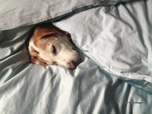 Berta has a snooze