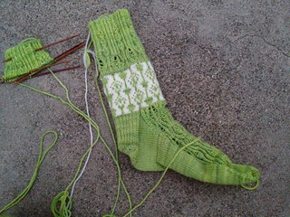 Echeveria Socks