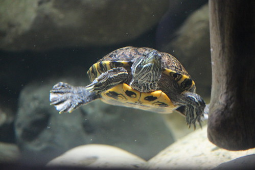 Turtles at the Zoo (3)