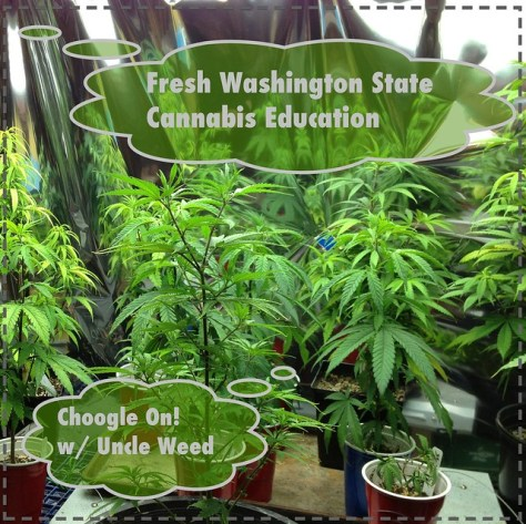 Fresh Washington State Cannabis Education