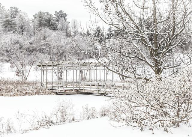 Plantations Pond