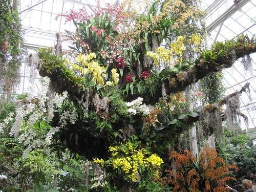 Orchid Show Display