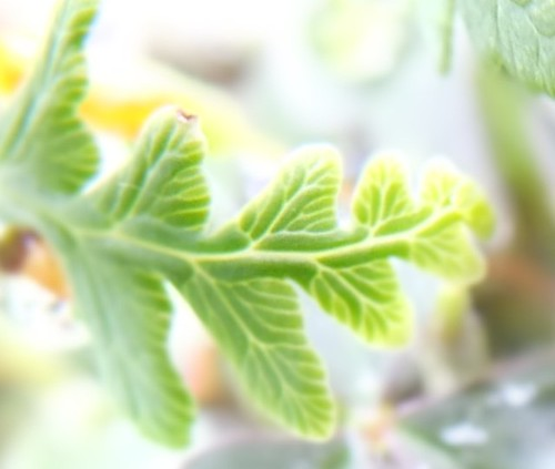 Sunlit leaves.jpg by Patricia Manhire