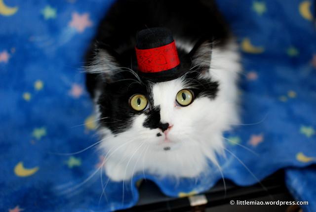 sprocket in little hat
