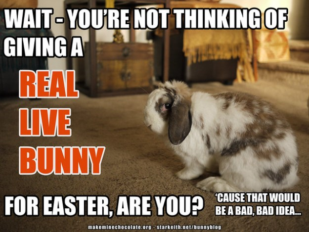 betsy - you're not thinking of giving a real bunny
