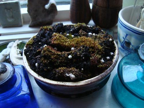 The moss ICU